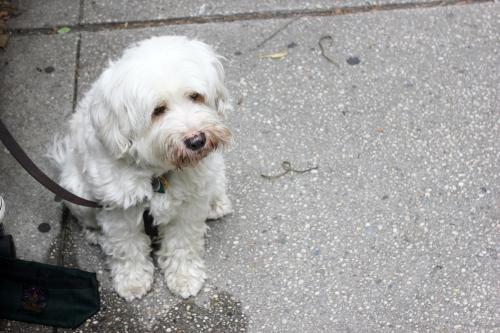 Doggy_2_Blog
