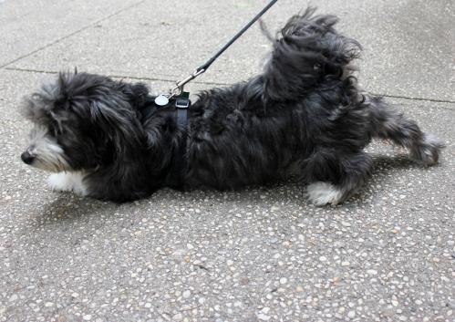 Doggy_Blog