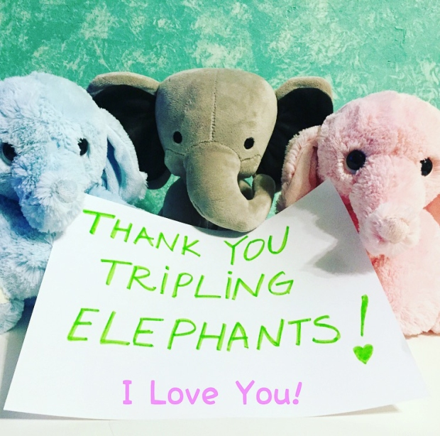 TriplingElephants_BLOG2