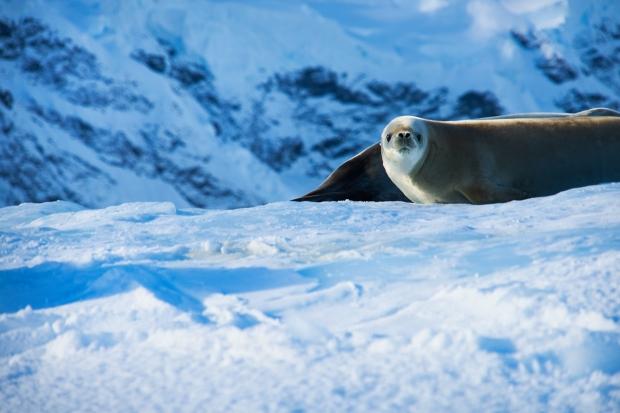 53_Seal