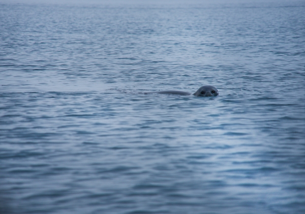 56_Seal