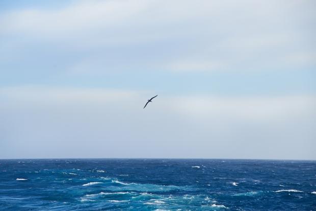 Albatross_21