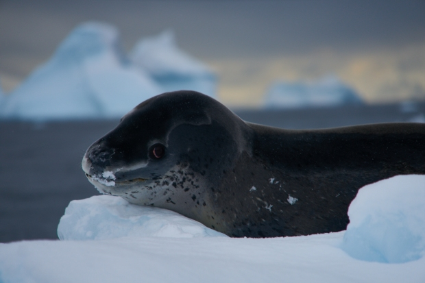 Antartica_1093