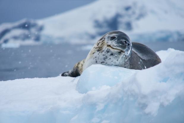 Antartica_1097