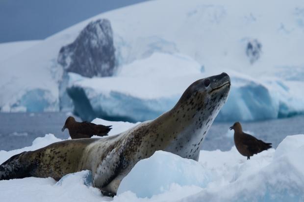 Antartica_1098a