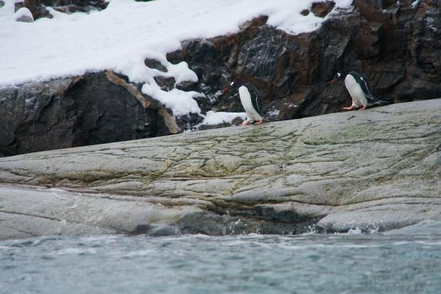 Antartica_1140