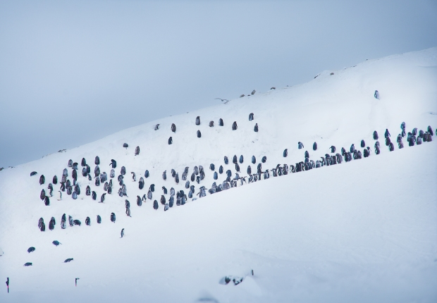 Penguin_25