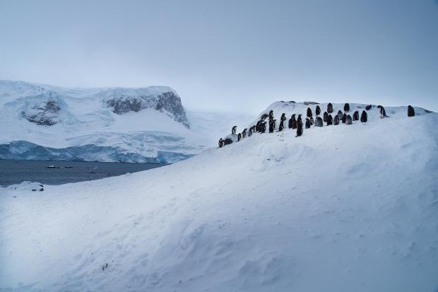 Penguin_26