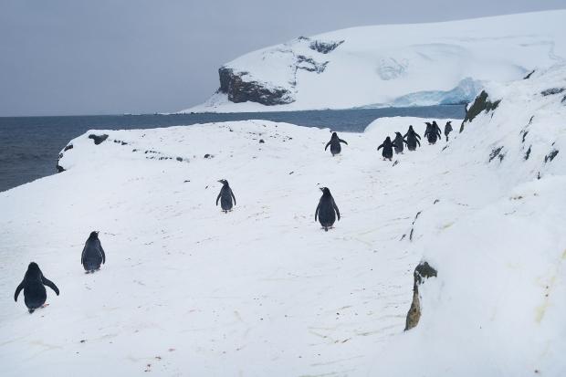 Penguin_31