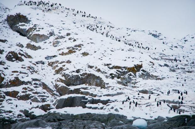 Penguin_40
